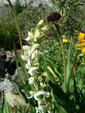 wjmt-day18-3-orchid.jpg (179649 bytes)