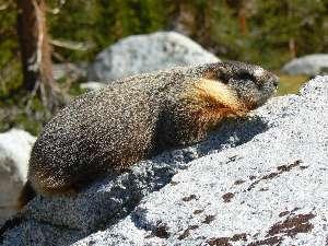 wjmt-day24-7-baking-marmot.jpg (461102 bytes)