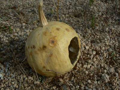 wjt2011-day4-2-gourd.jpg (361120 bytes)