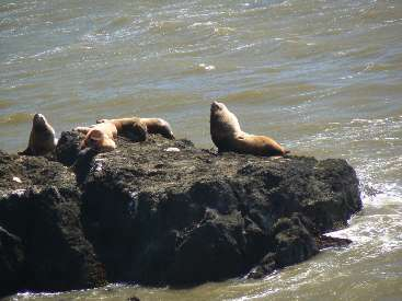 wlc11-day1-15-Sea-Lion-Rock1.jpg (326476 bytes)
