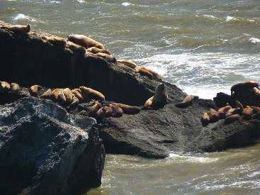 wlc11-day1-16-Sea-Lion-Rock2.jpg (332020 bytes)