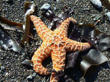 wlc11-day2-7-starfish.jpg (566150 bytes)