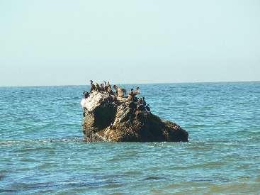 wlc11-day4-10-pelican-cormorants.jpg (299752 bytes)