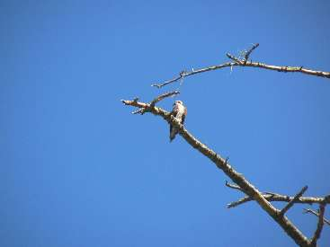 wlc11-day4-9-osprey.jpg (169019 bytes)