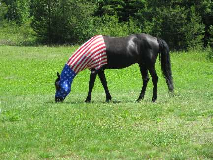 wselkirk-bike-day10-3 All-American Horse.jpg (506475 bytes)