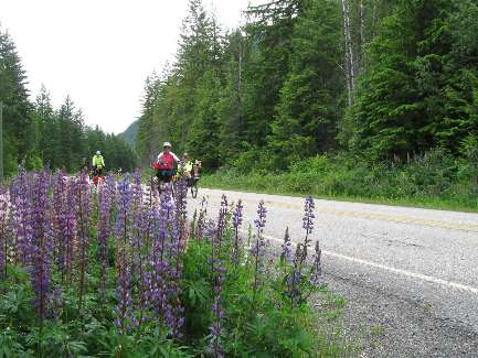 wselkirk-bike-day5-6  all that rain = flowers.jpg (490849 bytes)