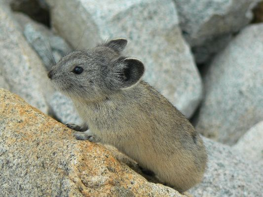I'm a Pika of the Sierra, and I approve these trip reports
